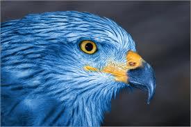 Aigle bleu totem